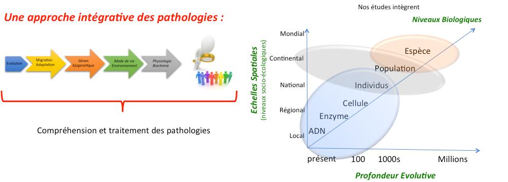 échelle étude médecine évolutive
