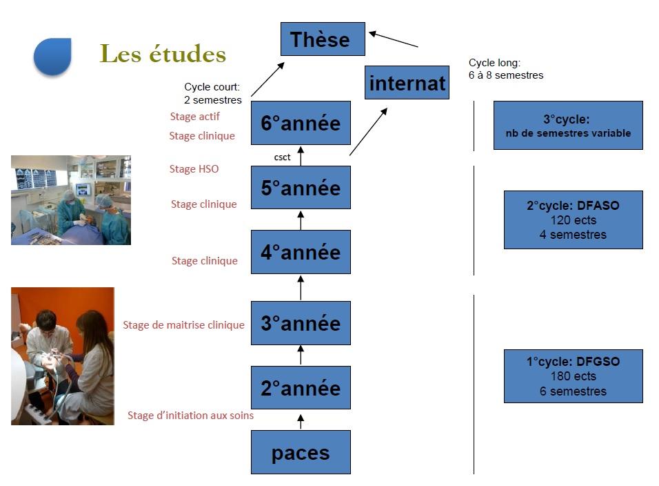 Shéma des études